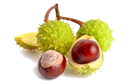 Chestnut extract