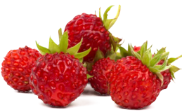Wild strawberry extract