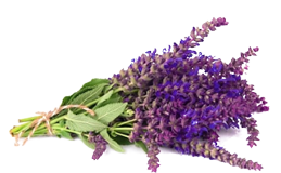 Sage salvia sclarea essential oil